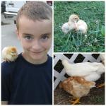 chickensben-blog-1